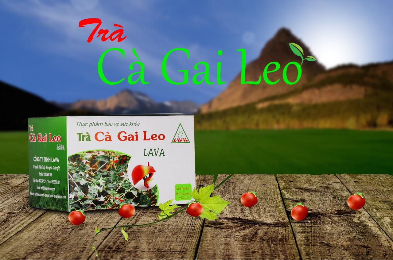 Trà Cà Gai Leo- Hỗ trợ điều trị về gan